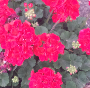 Screen Shot 2014-04-04 at 8.17.49 AM